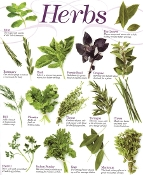 Herbs & Homeopathy for Pregnancy and beyond